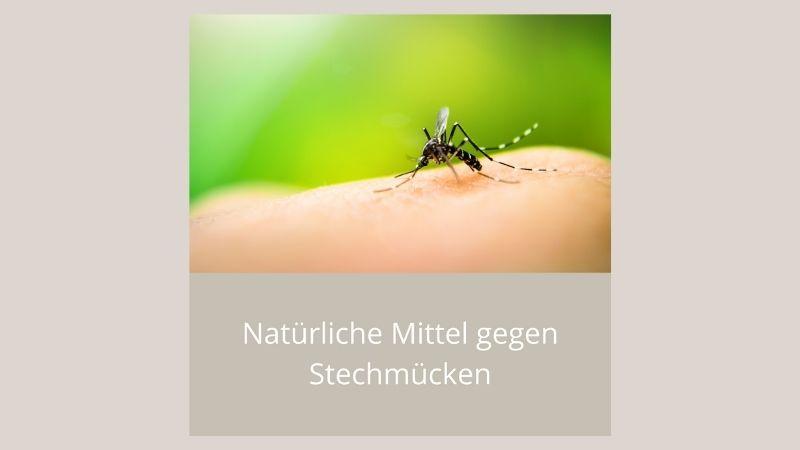 Natürliche Mittel gegen Stechmücken
